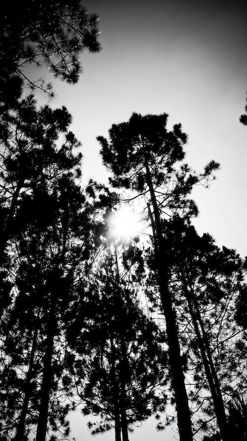 Immagine gratuita di alberi, bianco, indonesia, leggero