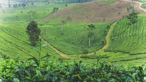 Immagine gratuita di alberi, campo, impianto, indonesia