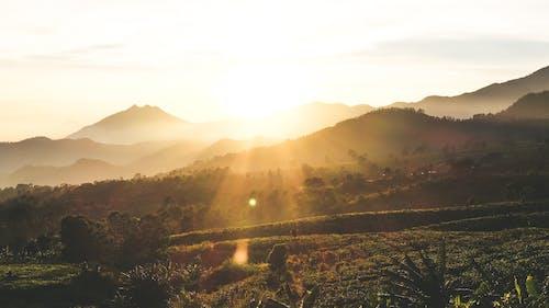 Immagine gratuita di alba, campo, campo da tè, chiarore