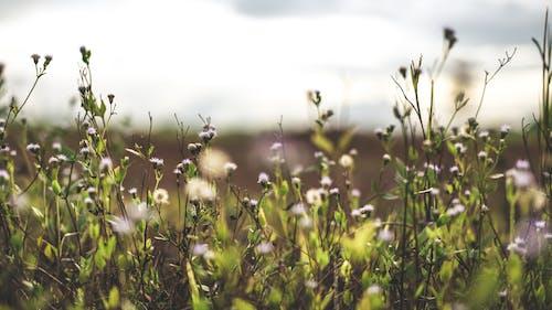 Immagine gratuita di bocciolo, fiore, flora, indonesia