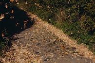 road, path, way