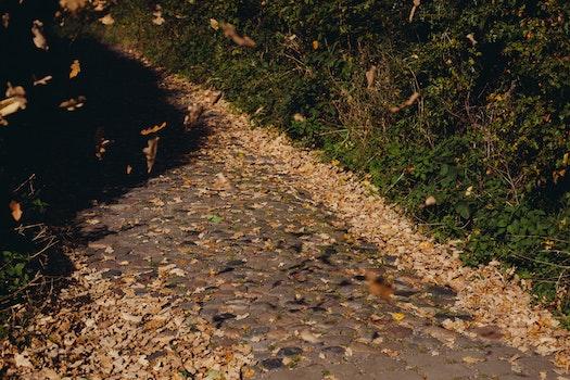 Free stock photo of road, path, way, leaf