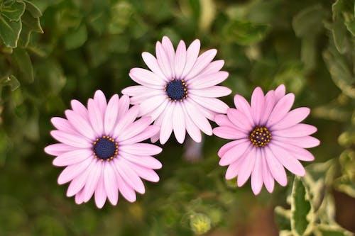 Çiçekler, doğa, güzel çiçek, Mor çiçekler içeren Ücretsiz stok fotoğraf