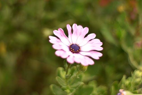 Çiçekler, doğa, güzel çiçekler, Mor çiçekler içeren Ücretsiz stok fotoğraf