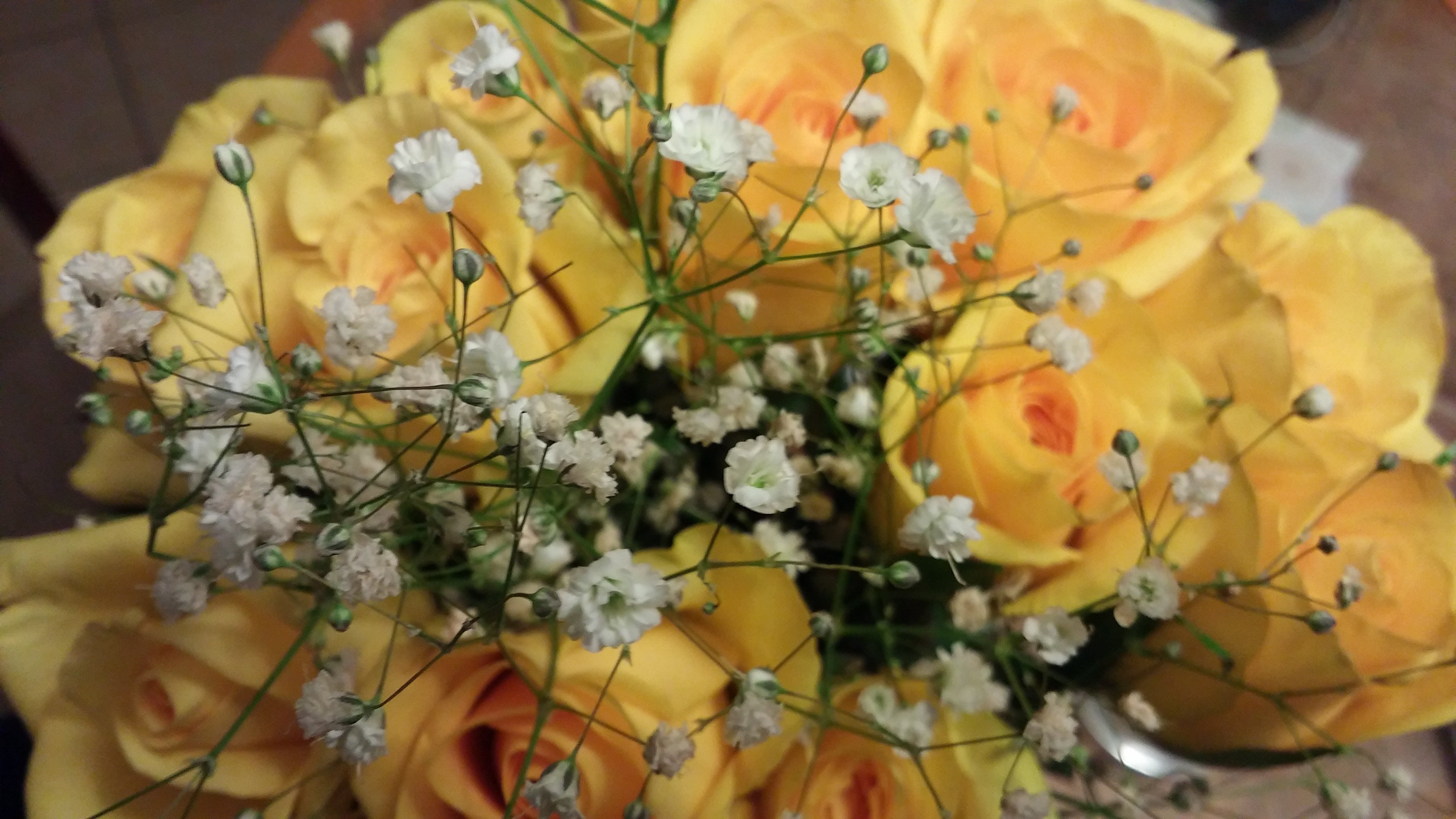 Free stock photo of roses, yellow roses