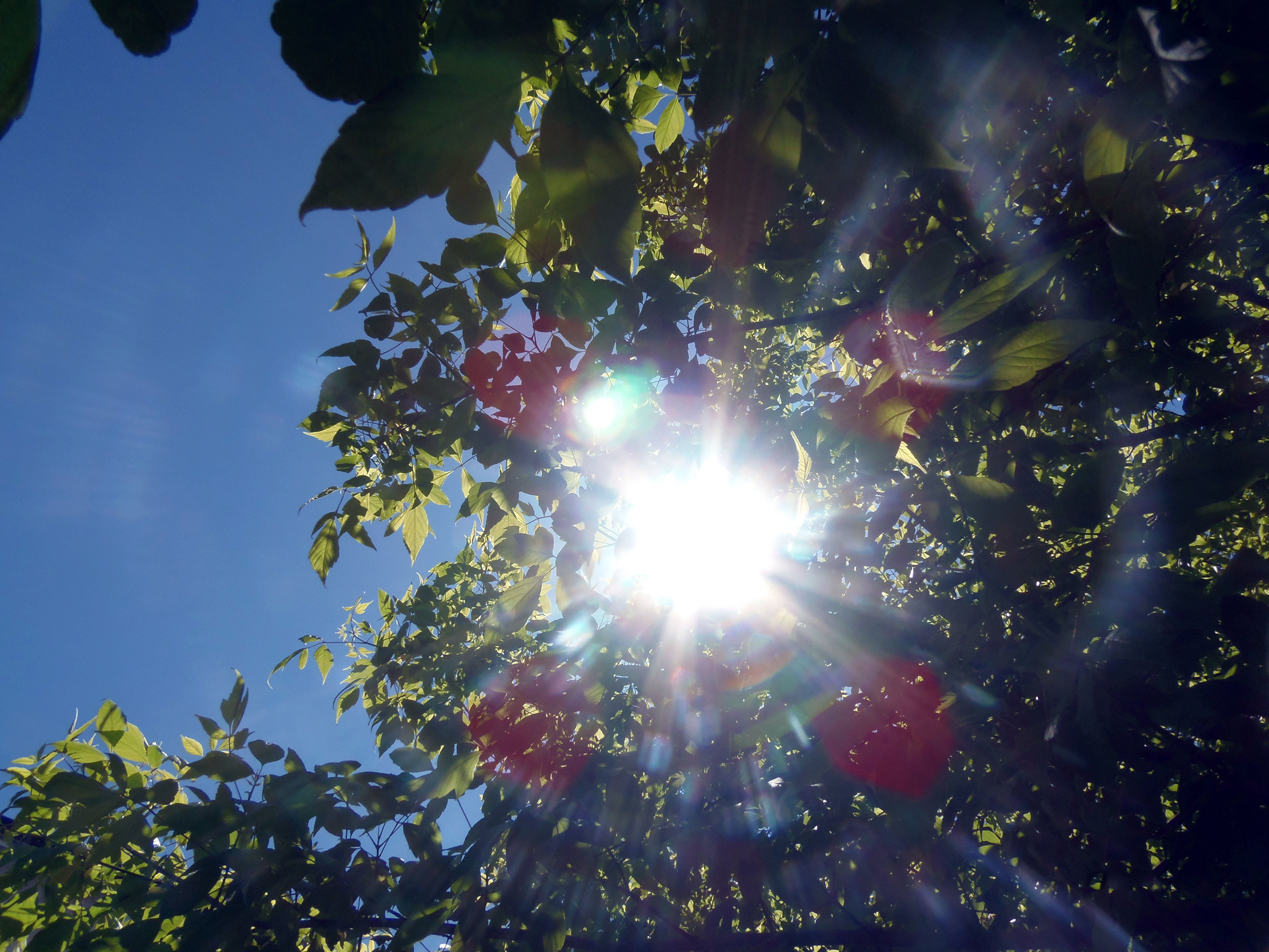 Worm's Eye View of Red and Green Outdoor Plant With Sunlight Painting