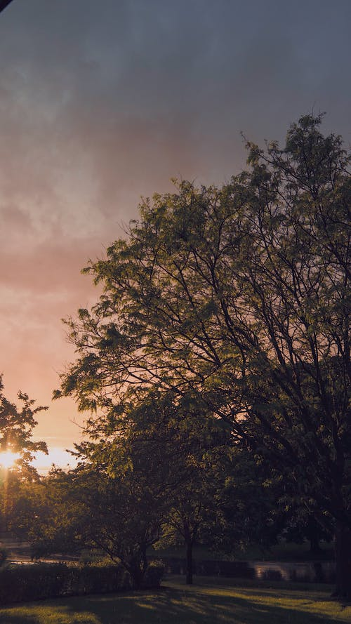 Free stock photo of after the rain, color, golden hour, haze