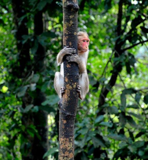 Imagine de stoc gratuită din animal, arbori, codru, culori