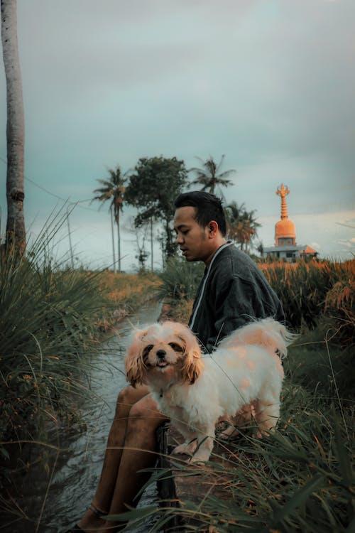 Gratis stockfoto met babyhondje, Bali, boerderij, groen