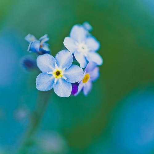 Shallow Focus Photography of Blue and Purple Flowers