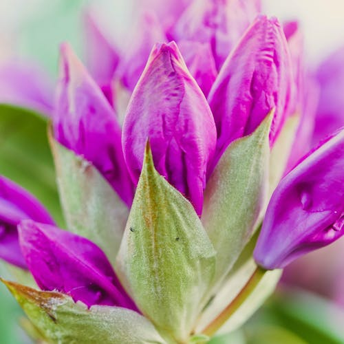 Free stock photo of beautiful, beautiful flowers, flower, macro