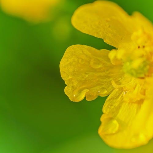 Free stock photo of closeup, flower, green, macro