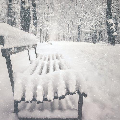 Photos gratuites de assieds-toi, autriche, banc, hiver