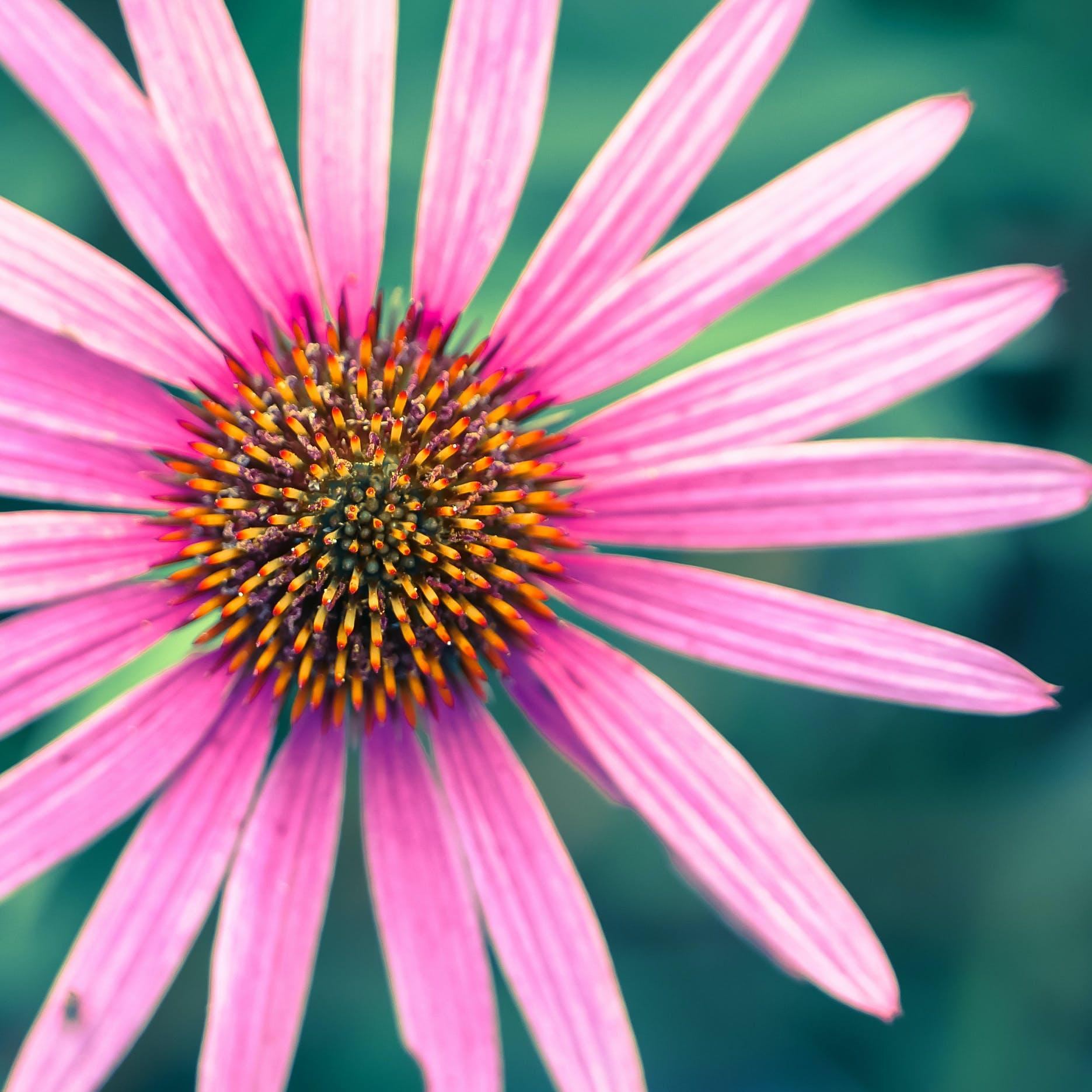 Photos gratuites de brillant, brouiller, couleurs, croissance