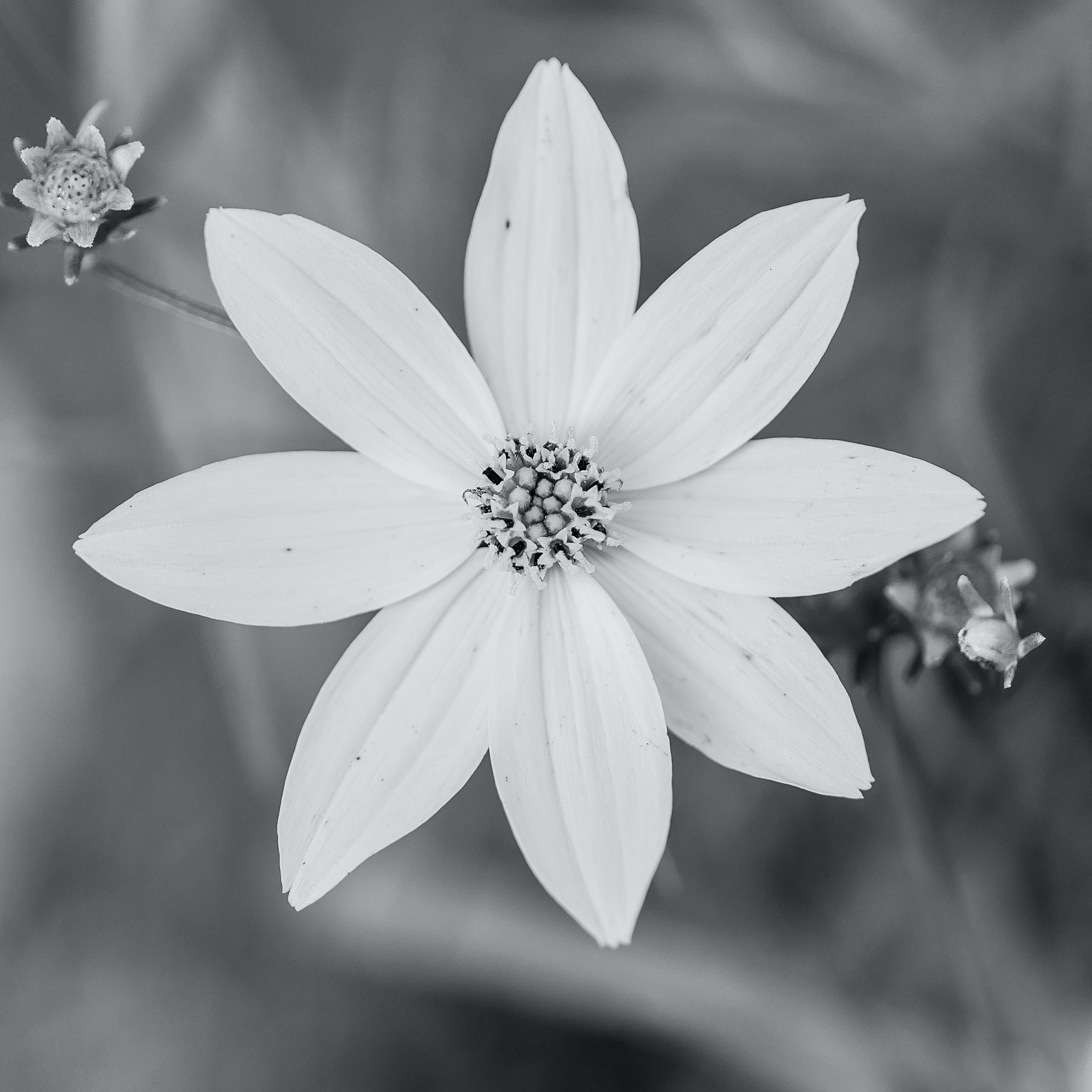 Great beautiful flowers in black and white gallery wedding and free stock photo of beautiful beautiful flowers black and white mightylinksfo Image collections