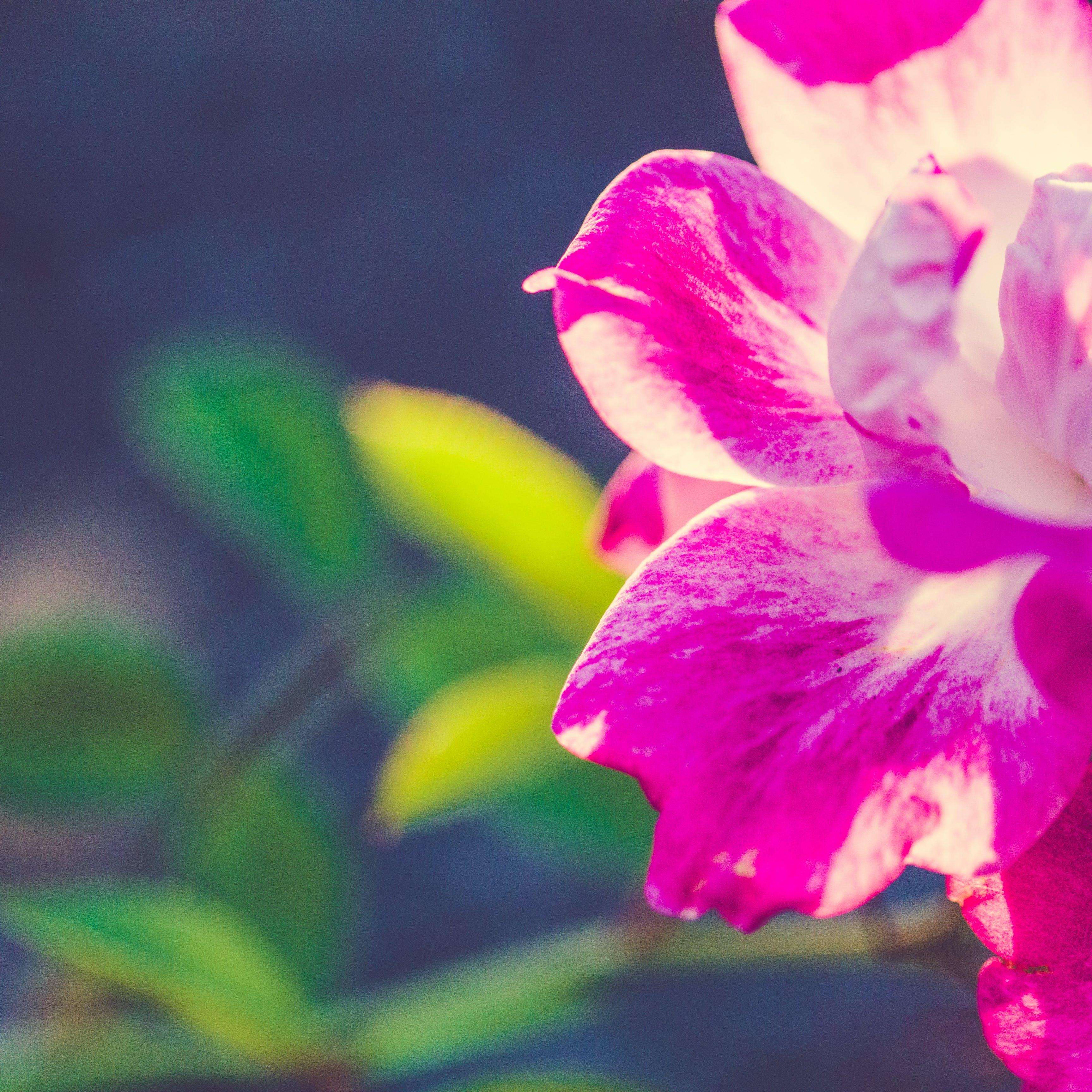 Kostenloses Stock Foto zu blume, makro, makrofotografie, natur