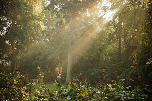 パーク, 日光の無料の写真素材