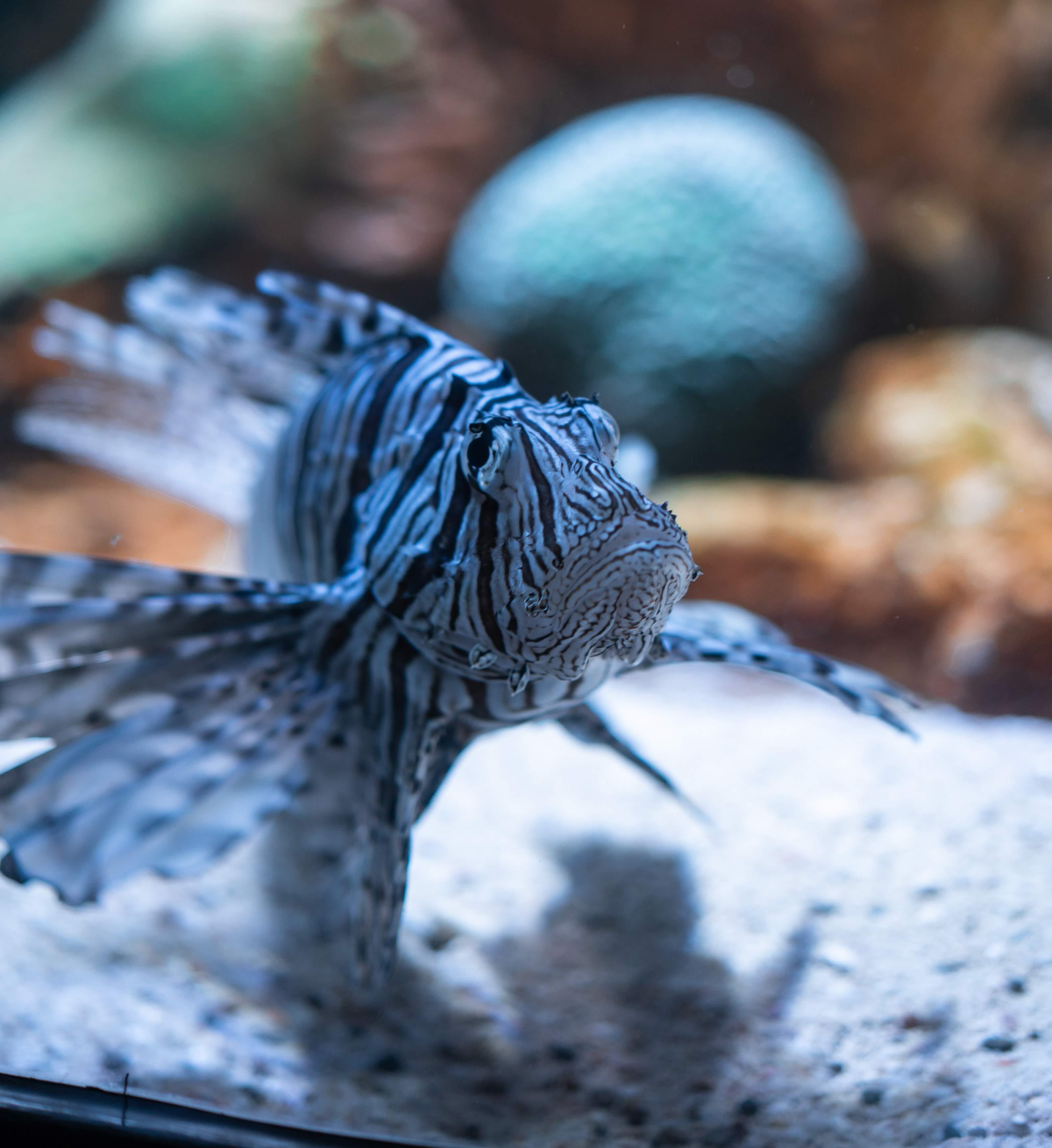 Kostenloses Stock Foto zu aquarium, fisch, grosser fisch, tiefenschärfe