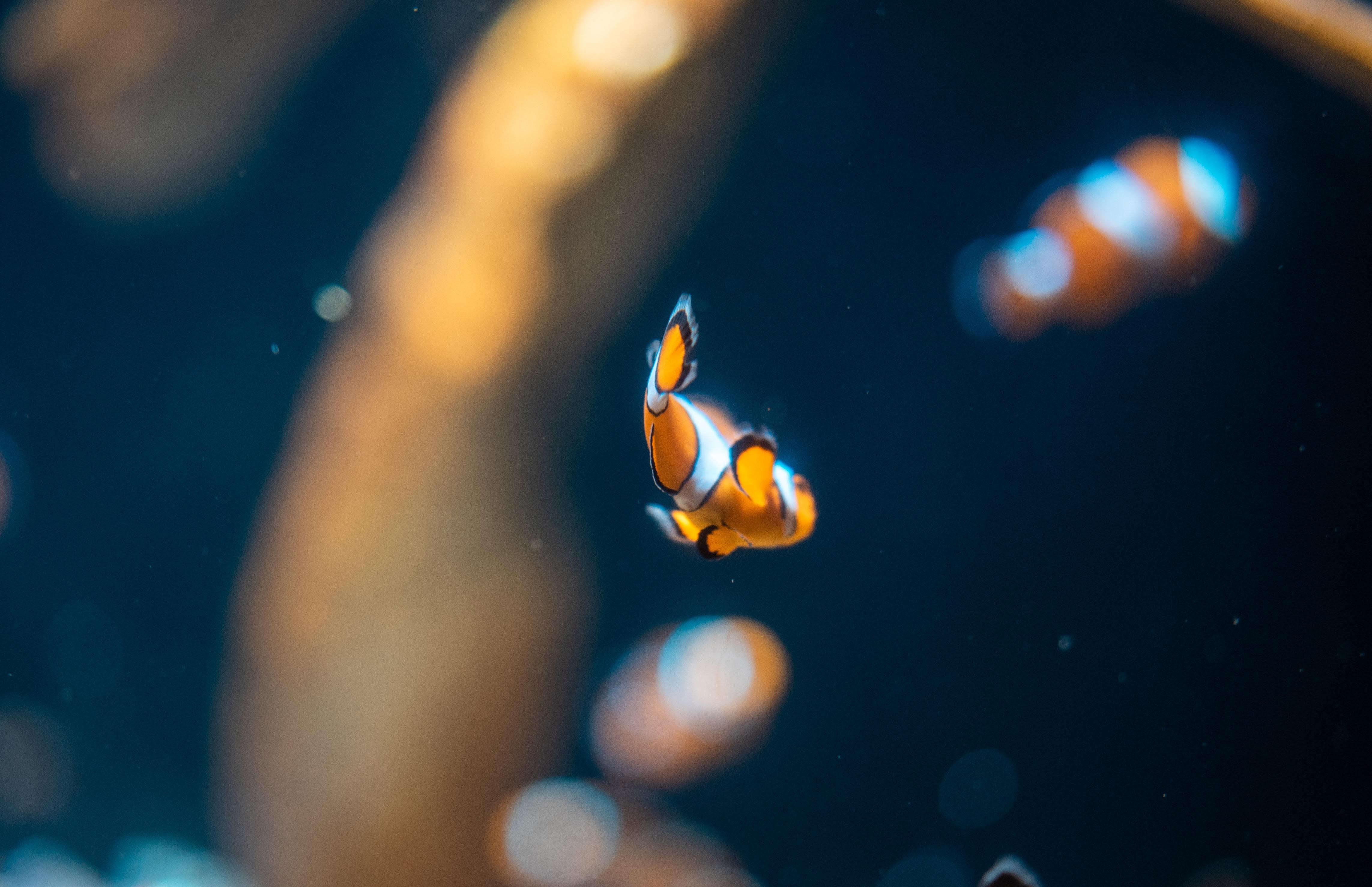 Kostenloses Stock Foto zu aquarium, blau, fisch, meerestier