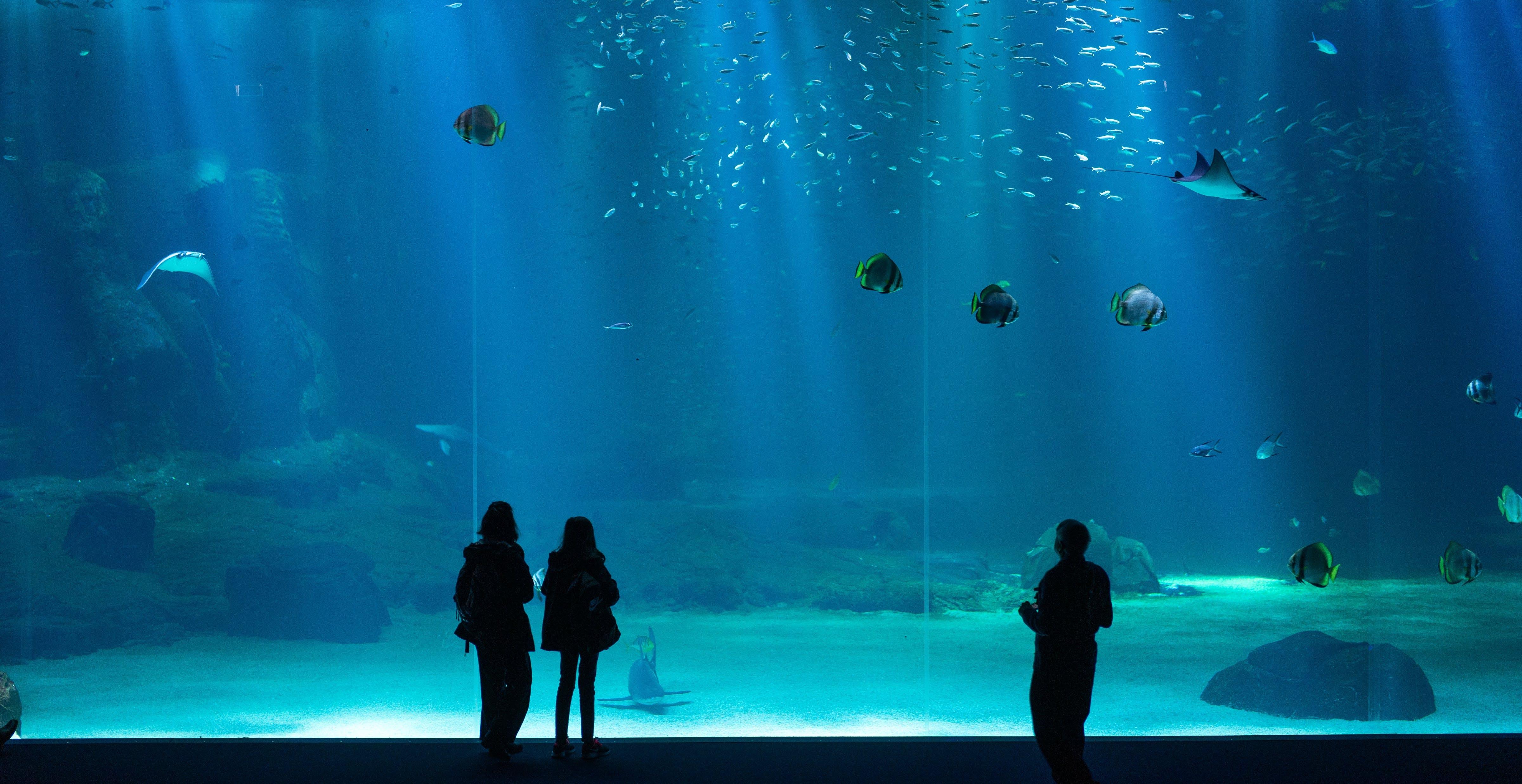Kostenloses Stock Foto zu aquarium, fisch, fische, menschen