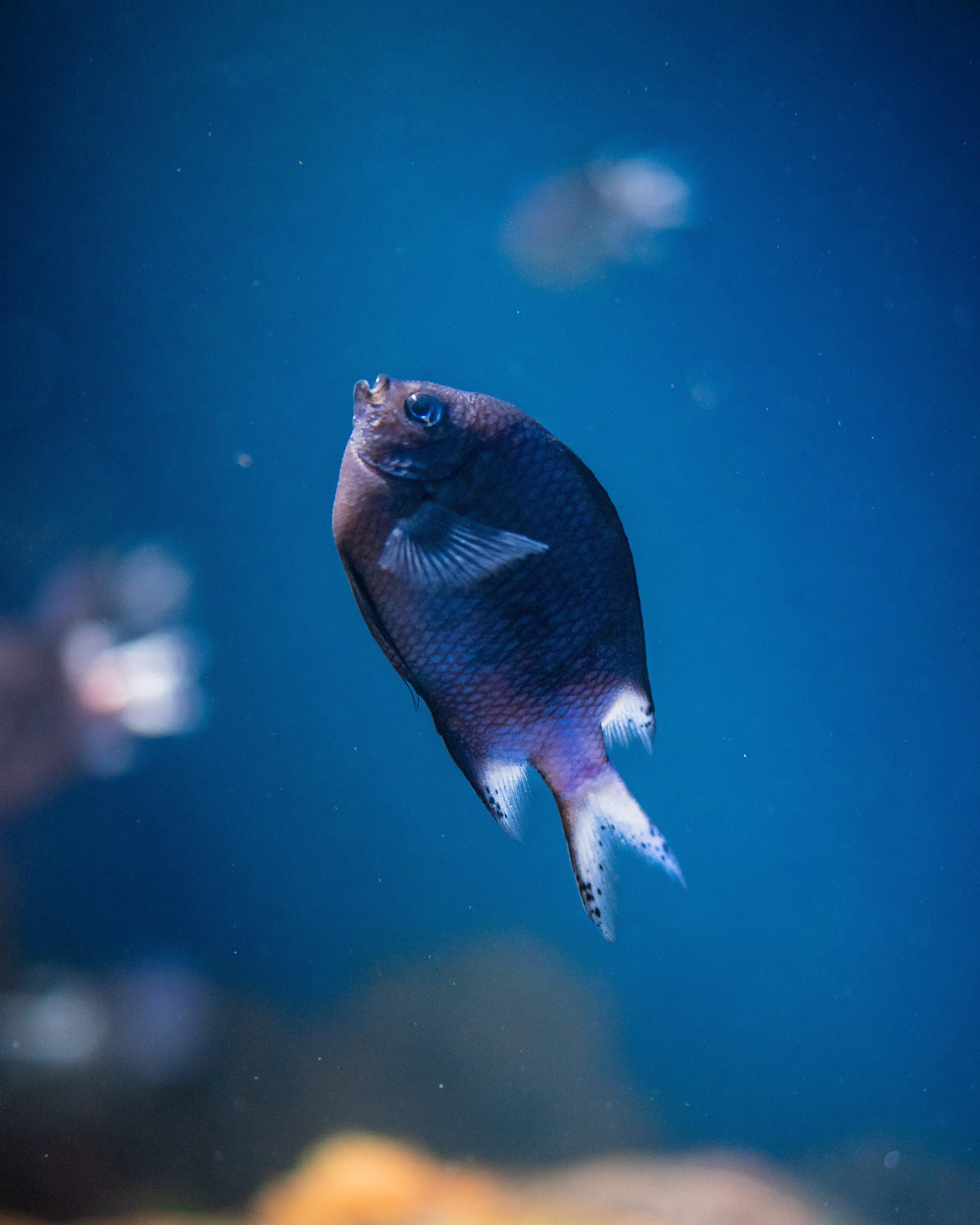 Безкоштовне стокове фото на тему «акваріум, вода, водна тварина, дика природа»