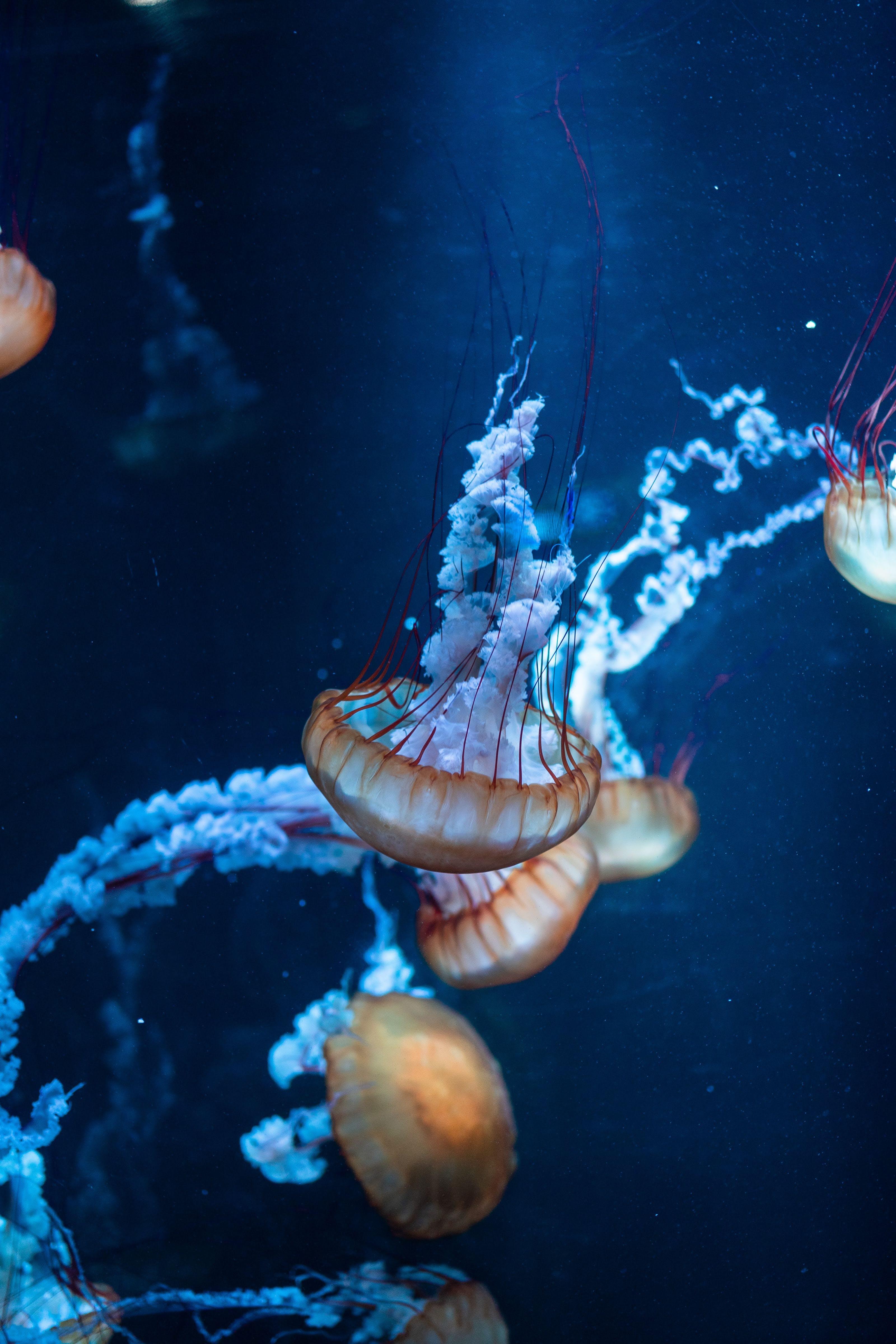 Kostenloses Stock Foto zu aquarium, baden, marine, qualle