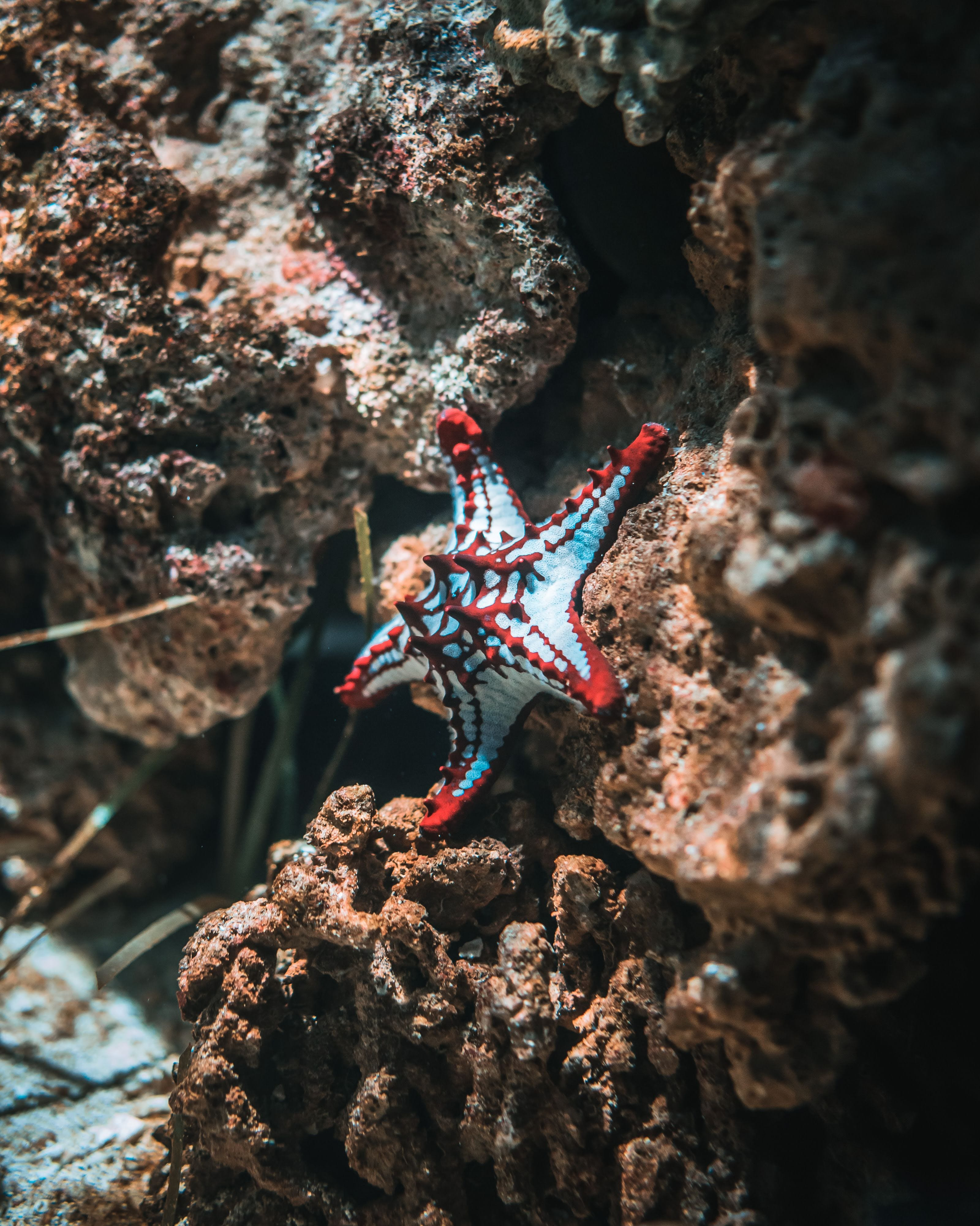 Starfish On Brown Stone