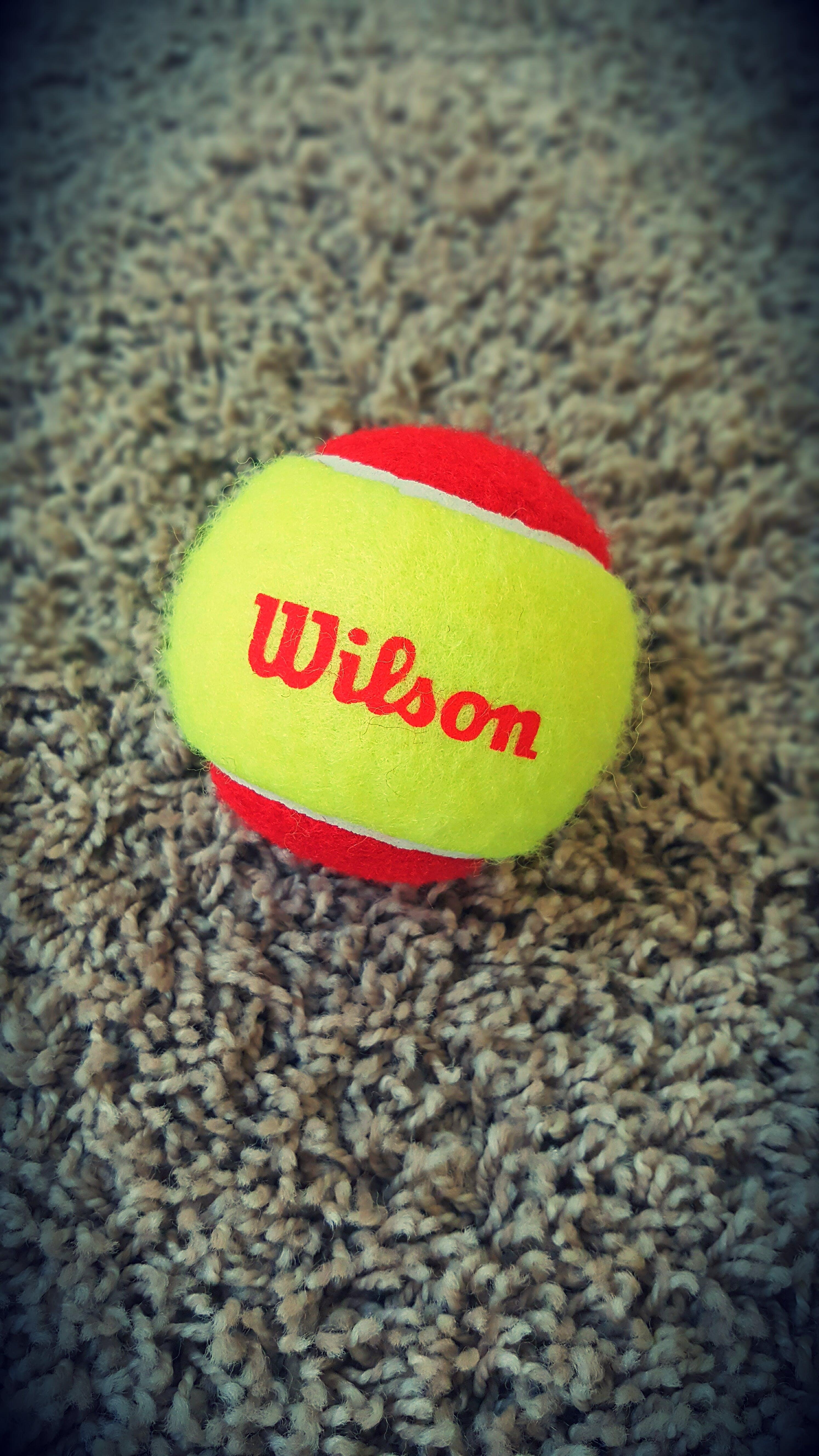 Kostenloses Stock Foto zu tennis, tennis ball, teppich, wilson