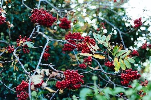 Free stock photo of nature, red, shrub, trees