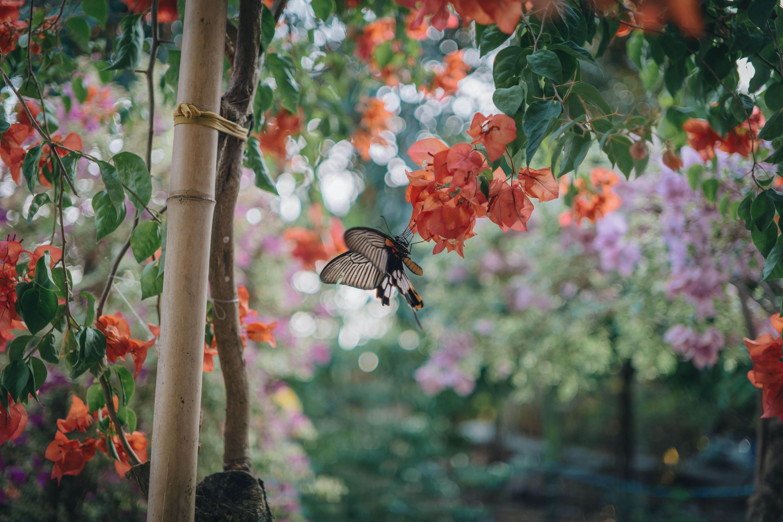 動物, 園林植物, 園林花卉, 增長 的 免费素材照片