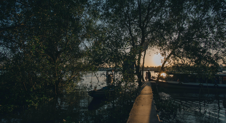 Darmowe zdjęcie z galerii z drzewa, gałęzie, kajaki, krajobraz