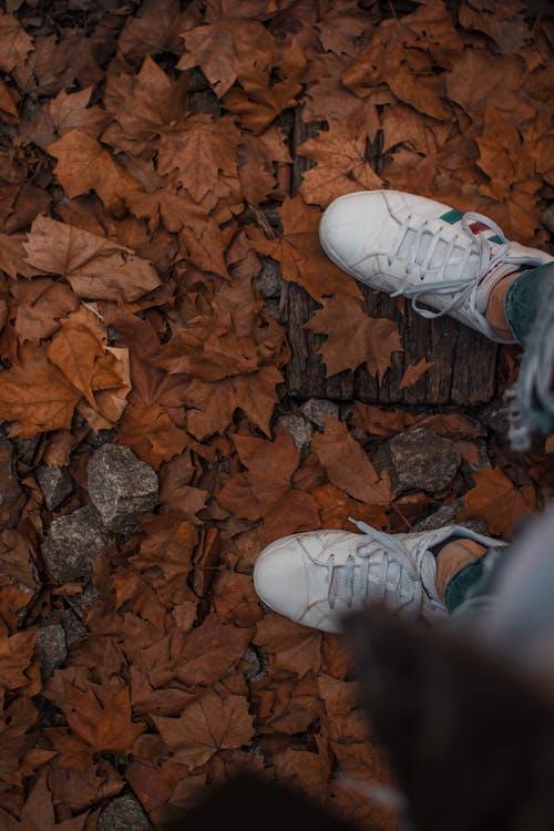 ต้นเมเปิล, รองเท้า, รองเท้าผ้าใบ