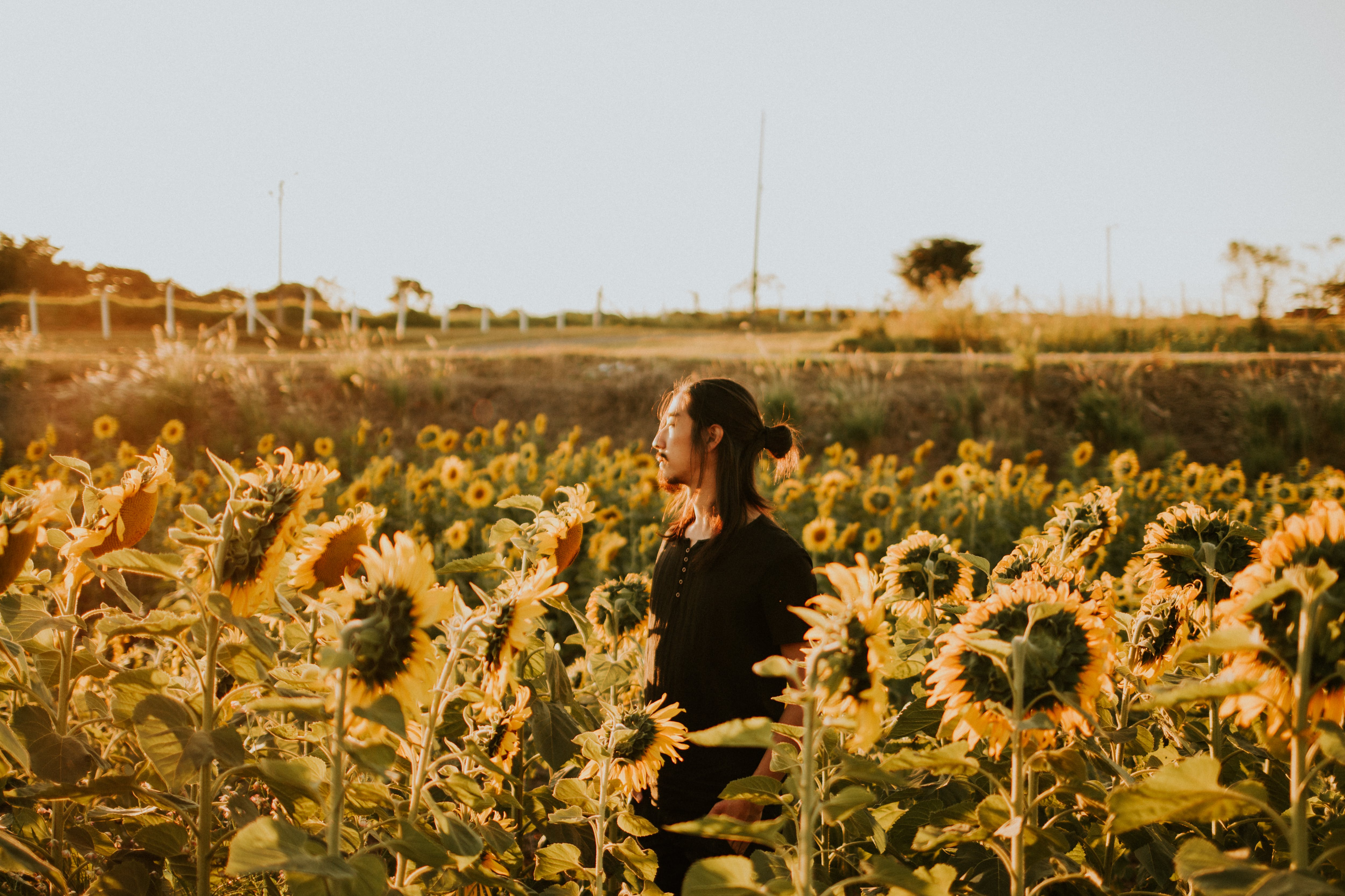 Selective Focus Photography of Man Standing and Surrounded by Sunflower