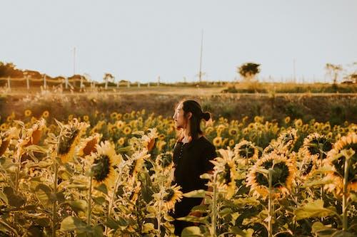 Gratis arkivbilde med åker, bane, blomst, dyrket mark