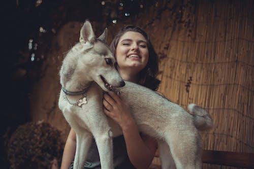 Fotos de stock gratuitas de colores de otoño, husky, Husky siberiano, mujer