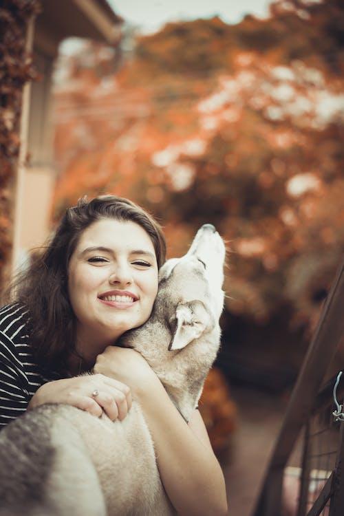 Imagine de stoc gratuită din câine, culori de toamnă, femeie câine, husky
