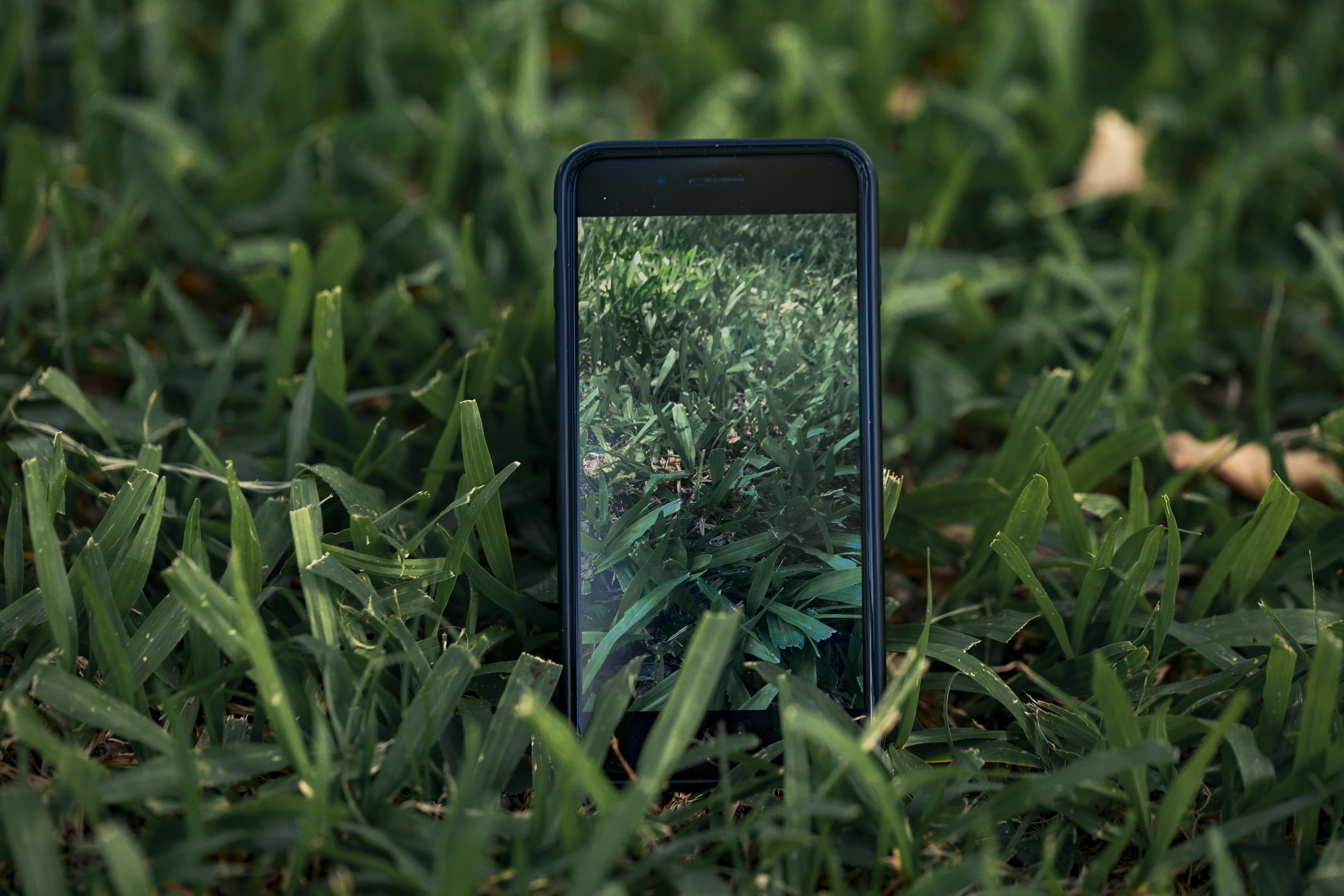 Free stock photo of green, iphone