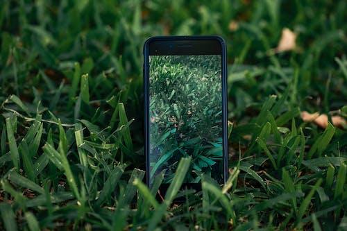 녹색, 아이폰의 무료 스톡 사진
