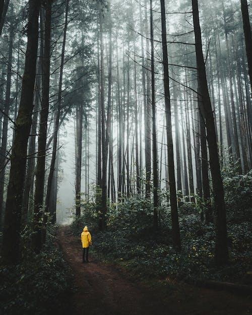Безкоштовне стокове фото на тему «бачення, ґрунтова дорога, дерева, жовта куртка»