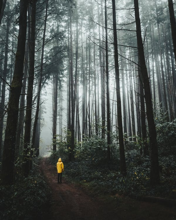Person Standing Near Tall Trees