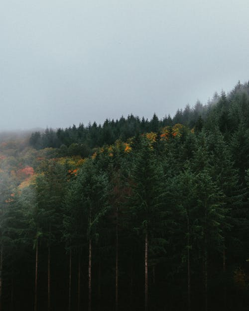 Foto stok gratis hijau abadi, hutan, kayu, konifer