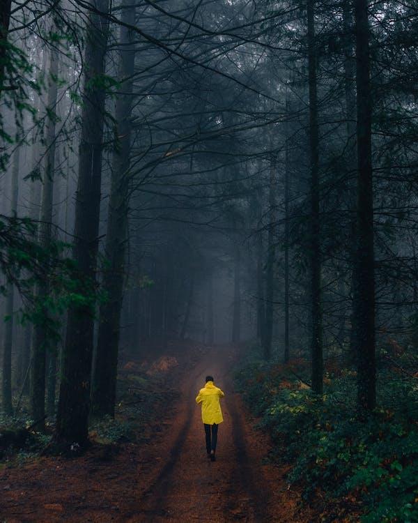 alam, berjalan, berkabut