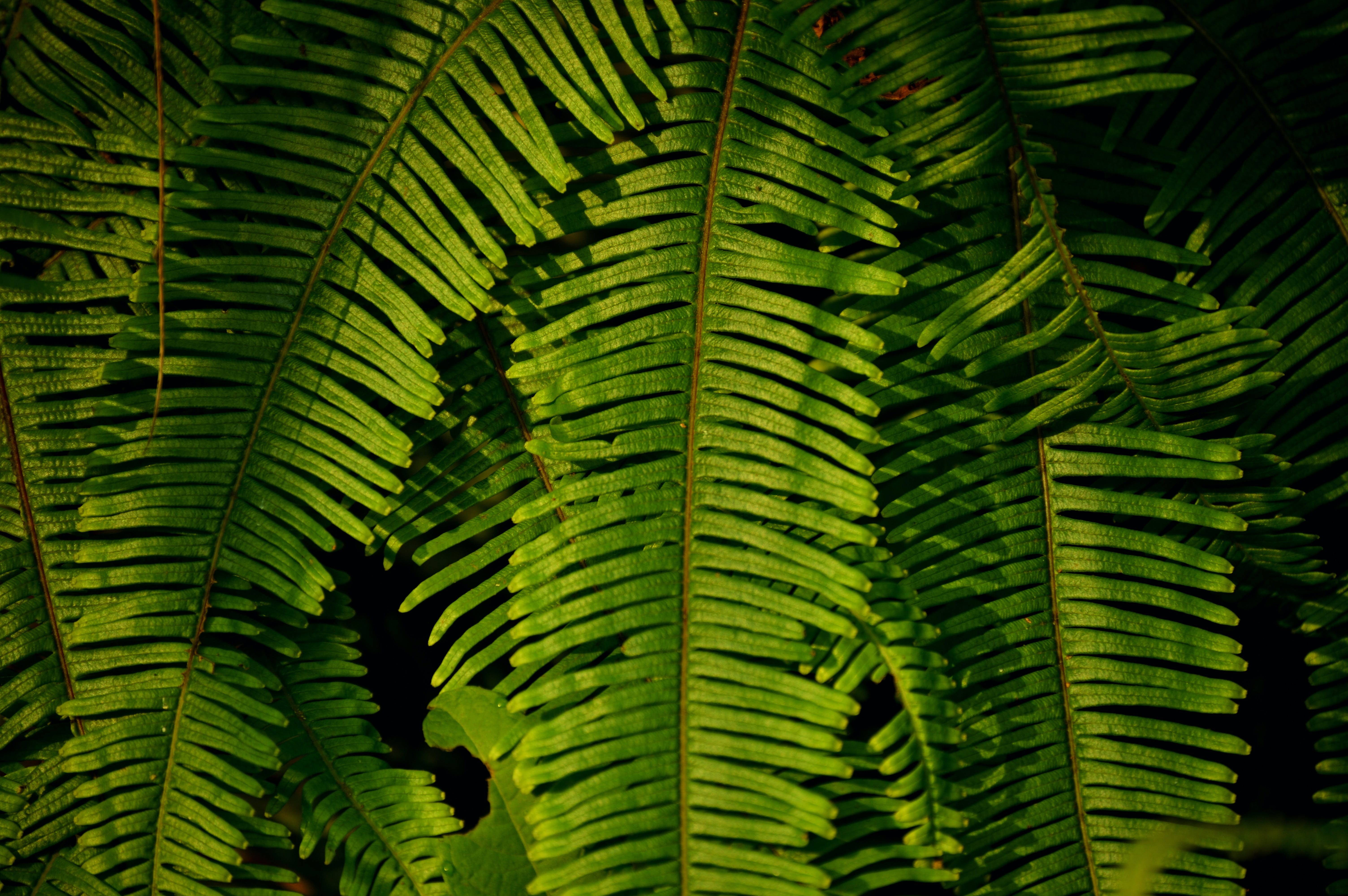 Selective Focus Photography of Fern Plants