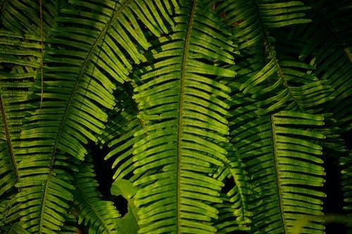 Photos gratuites de botanique, branche, buisson, couleur