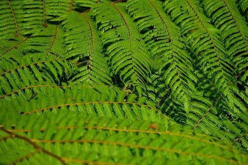 Foto stok gratis alam, alami, botani, cabang