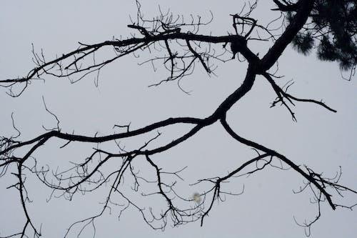 樹 的 免費圖庫相片