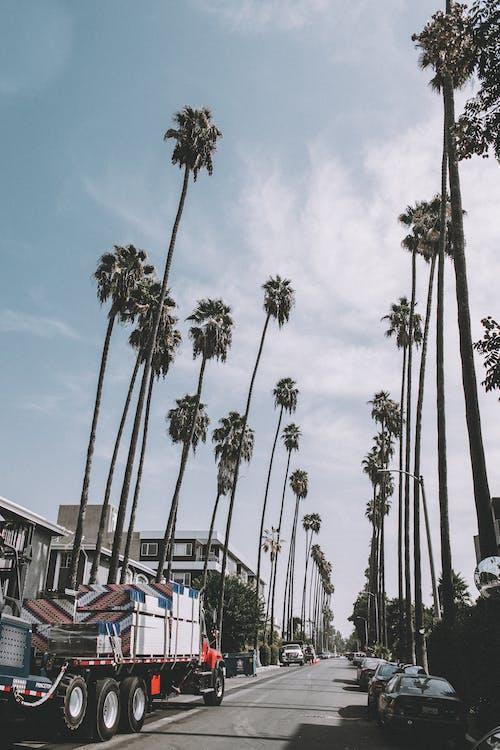 Fotos de stock gratuitas de alto, aparcado, arboles, asfalto