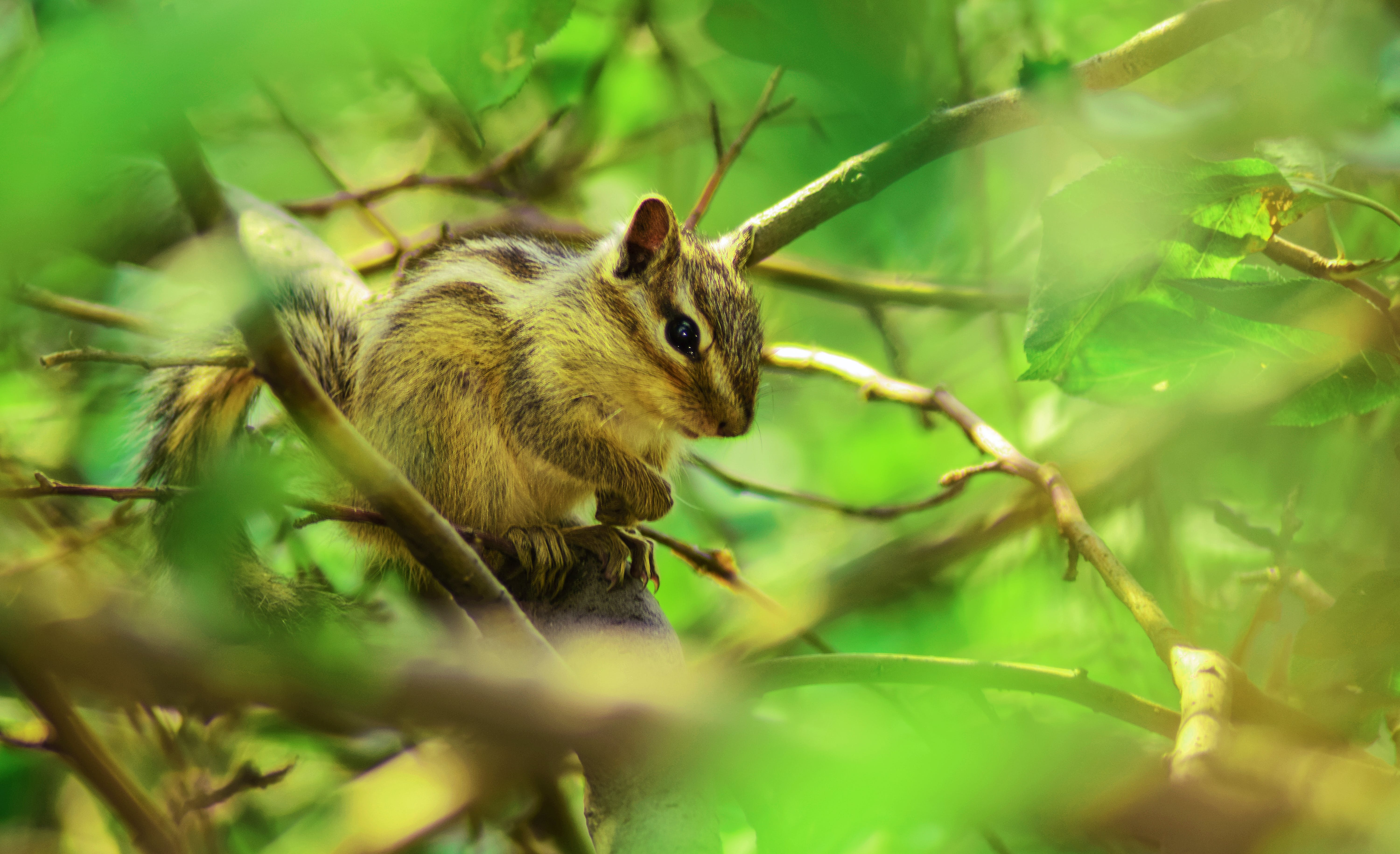 Brown Squirrel Perched on Tree Branch in Selective Focus Photography