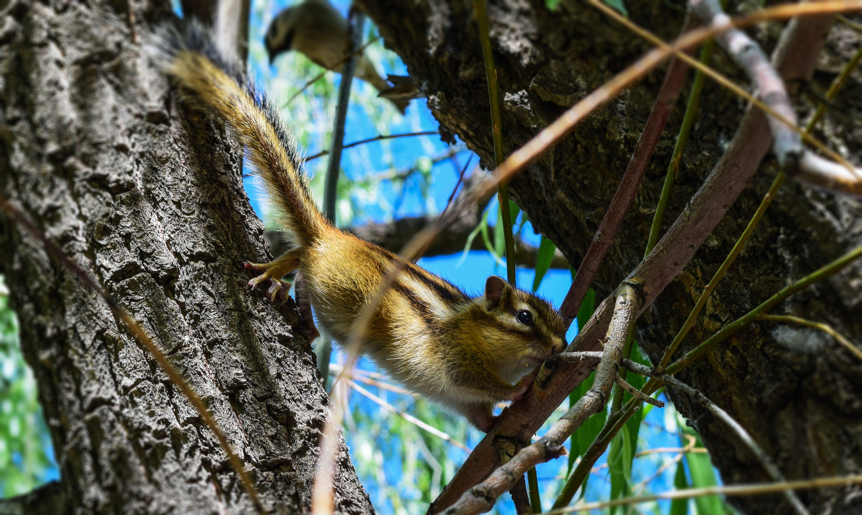 ağaç, ahşap, hayvan, sevimli içeren Ücretsiz stok fotoğraf