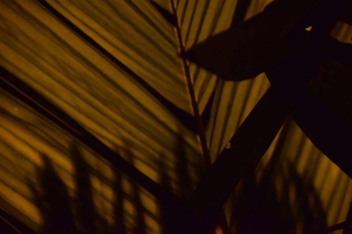 night, palm, palm leaf